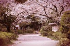 Flor de cerejeira de Japão imagem de stock