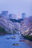 A flor de cerejeira de Sakura ilumina-se acima Imagens de Stock Royalty Free