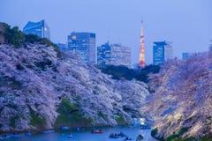 A flor de cerejeira de Sakura ilumina-se acima e marco da torre do Tóquio Fotografia de Stock