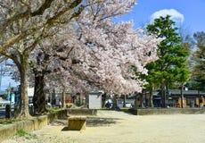 Flor de cerejeira em Kyoto, Jap?o imagem de stock