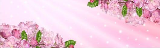Flor de cerejeira japonesa Imagens de Stock