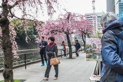 Flor de cerejeira japonesa da pintura do artista na rua | Estilo de vida do pintor no Tóquio Japão o 31 de março de 2017 Foto de Stock Royalty Free