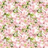 Flor de cerejeira - maçã, flores de sakura Teste padrão sem emenda floral watercolor Fotografia de Stock