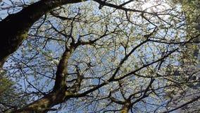 flor de cerejeira na mola com movimentação da câmera filme