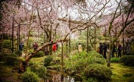 Flor de cerejeira no jardim em Kyoto, Japão fotos de stock