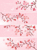 Flor de cereza, bandera. Fotos de archivo libres de regalías