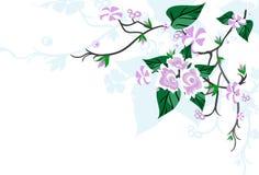 Flor de cereza de Sakura Foto de archivo