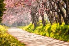 Flor de cereza hermoso Foto de archivo libre de regalías