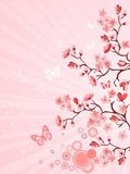 Flor de cereza japonés Foto de archivo libre de regalías