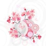 Flor de cereza japonés Imágenes de archivo libres de regalías
