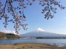 Flor de cerezo de Fujiwith de la montaña en el lago Kawaguchiko en un día soleado y un cielo claro Imagen de archivo libre de regalías