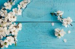 Flor de cerezo de la primavera en fondo de madera rústico Imagenes de archivo