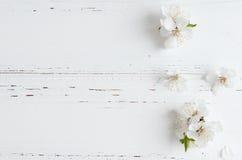 Flor de cerezo de la primavera en fondo de madera rústico Imagen de archivo