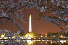 Flor de cerezo en DC imágenes de archivo libres de regalías