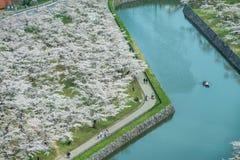 Flor de cerezo en el parque de Goryokaku Fotos de archivo
