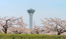 Flor de cerezo en el parque de Goryokaku Imagenes de archivo