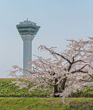 Flor de cerezo en el parque de Goryokaku Imágenes de archivo libres de regalías