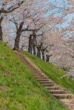 Flor de cerezo en el parque de Goryokaku Fotografía de archivo