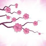 Flor de cerezo. flores de papel 3d. Foto de archivo