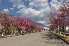 Flor de cerezo hermosa Fotografía de archivo libre de regalías