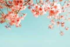 Flor de cerezo hermosa de la flor de Sakura del vintage en primavera imagen de archivo