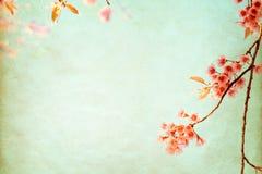 Flor de cerezo hermosa de la flor del árbol de Sakura en primavera imagenes de archivo
