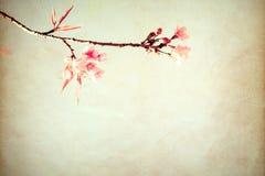 Flor de cerezo hermosa de la flor del árbol de Sakura en primavera fotos de archivo