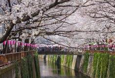 Flor de cerezo hermosa de Sakura Imagenes de archivo