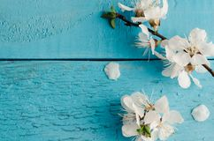 Flor de cerezo de la primavera en fondo de madera rústico Imágenes de archivo libres de regalías