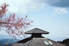 Flor de cerezo o flores de Sakura con el cielo azul imagen de archivo