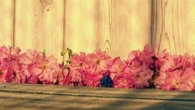 Flor de cerezo roja con el jacinto de uva en la madera almacen de video