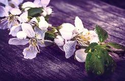 Flor de cerezo Sakura en el vintage de madera rústico de la tabla retro Imágenes de archivo libres de regalías