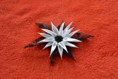 Flor de cetim Imagem de Stock Royalty Free
