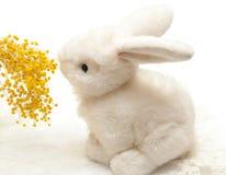 Flor de cheiro da mimosa do coelho branco do brinquedo imagem de stock