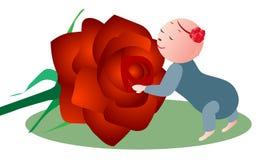 Flor de cheiro do bebê Fotografia de Stock Royalty Free