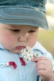 Flor de cheiro do rapaz pequeno Fotografia de Stock Royalty Free