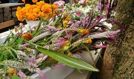 Flor de Cockcomb e do cravo-de-defunto de corte recentemente flor do jardim pronto para arranjar fotografia de stock royalty free