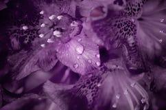 Flor de color morado oscuro Foto de archivo libre de regalías