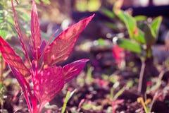 Flor de color rosa oscuro en izquierda Fotos de archivo