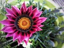 Flor de Colourfull Imagens de Stock Royalty Free