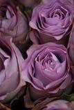 Flor de corte Foto de Stock