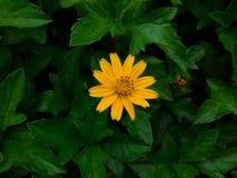 Flor de cristal Fotografía de archivo