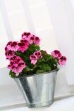Flor de Cutie Fotografia de Stock