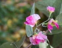 Flor de Deco Fotografia de Stock Royalty Free