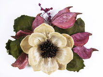 Flor de Dired Imagem de Stock
