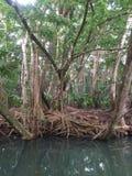 Flor de Dominica Water Foto de archivo libre de regalías