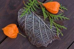 Flor de dos naranjas Fotos de archivo