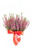 Flor de Erica imagen de archivo