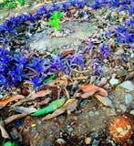 Flor de Fiolet imagem de stock
