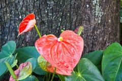 Flor de flamenco Foto de archivo